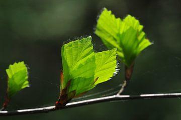 Pril lente groen van Theo van Woerden