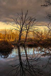 Landschap, spiegel van bomen in water.