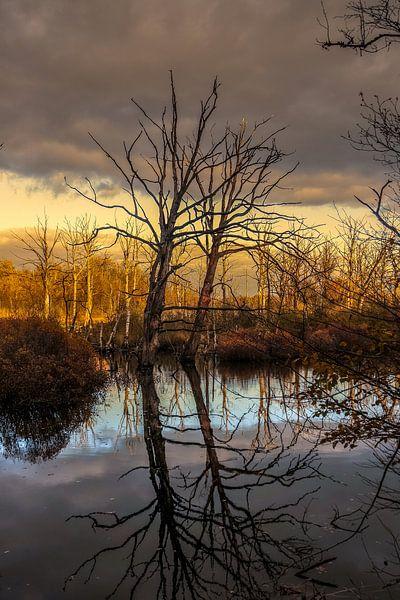 Landschap, spiegel van bomen in water. van Helga van de Kar