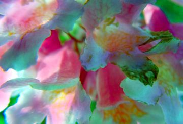 Blumenzauber2 van Peter Norden