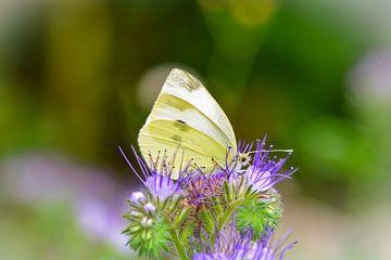 Papillon - Papillon blanc sur Claudia Evans