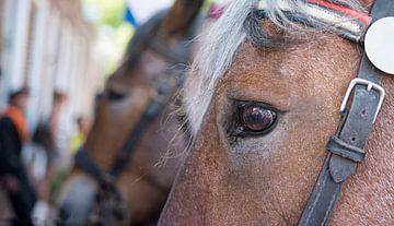 Paarden bij de ringstekenwedstrijd in Zeeland van Peter Bartelings Photography
