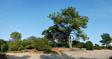 Een Zee Den van Wim vd Neut