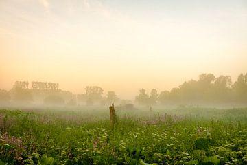 Baumstumpf im Morgennebel von Johan Vanbockryck