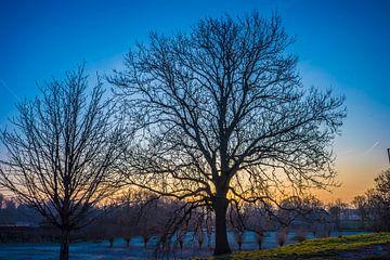Silhouette der Bäume von Fred Leeflang