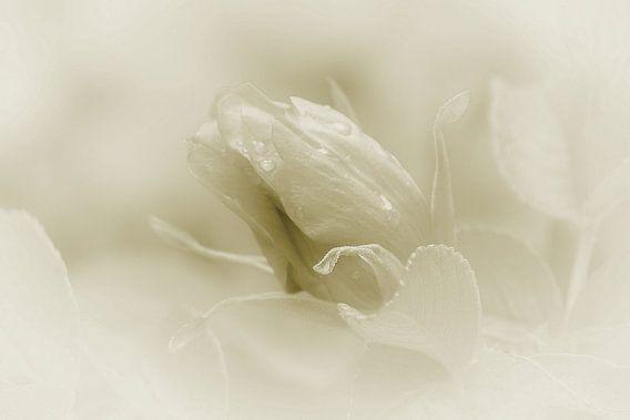 Soft van Yvonne Blokland