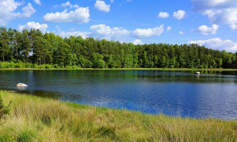 Idyllic Small Lake in the Sunshine of the Summer van Gisela Scheffbuch