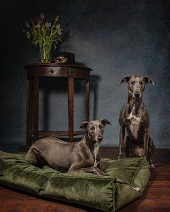 Windhunde mit Stil von Aisa Joosten