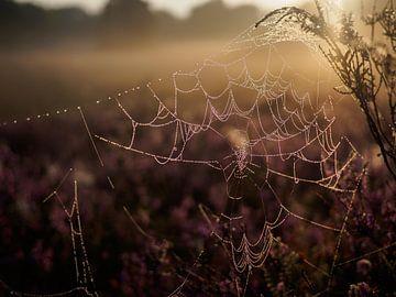 Vochtig spinnenweb tegen zonlicht van Frank Hoekzema