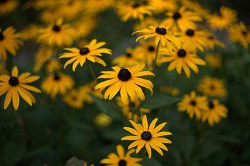 gelbe Blumen von harm Henstra