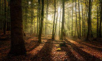 Jeder Baum hat seinen Schatten von Joris Pannemans - Loris Photography