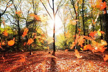 Vallende bladeren in de herst van Dennis van de Water