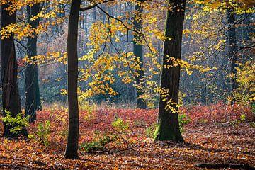 Leuchtendes Herbstlicht von Jose Gieskes