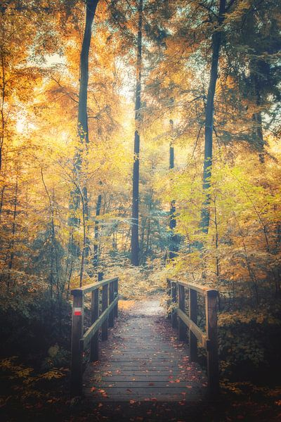 De brug van Diana de Vries