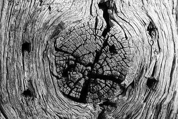 Baumstumpf mit Rissen und Löchern