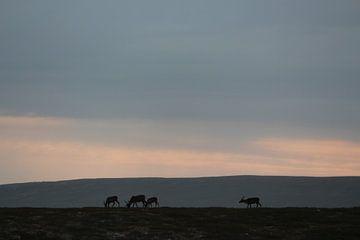 Rendieren op de Flatruet van By Foto Joukje