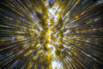 Forêt de bambous d'Arashiyama sur Maarten Mensink