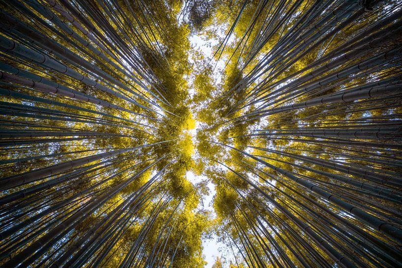Arashiyama Bambuswald von Maarten Mensink