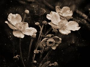 Herfst anemoon