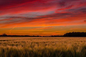 champ de blé sous le coucher du soleil rouge sur Fred van Bergeijk