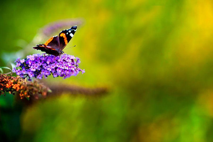 vlindertje van Huibert van der Meer