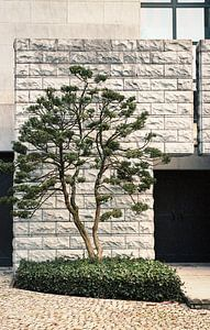 Seltsamer Baum von Karlijne Geudens
