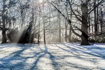 de zonnestralen door de bomen van Willy Sybesma