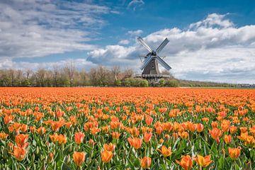 Tulpen Landschaft mit einer holländischen Windmühle von eric van der eijk