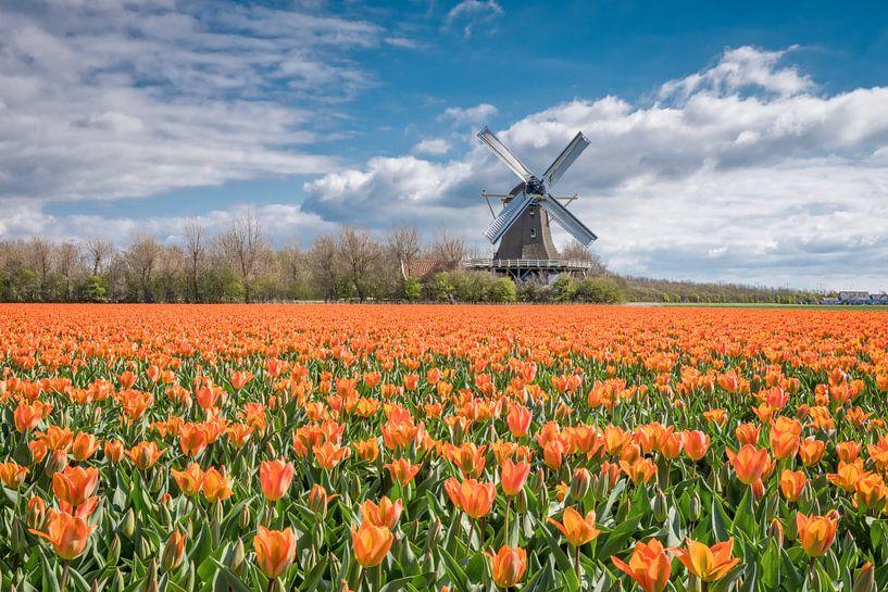 tulpenlandschap met een Hollandse molen van eric van der eijk