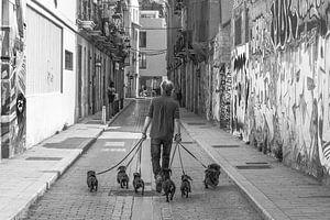 Dog sitter van Stefaan Tanghe