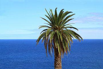 Palmboom en de oceaan van Jolanta Mayerberg
