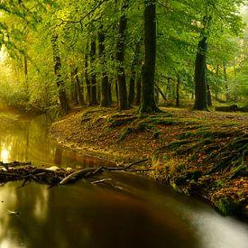 Nebenfluss in einem Buchebaumwald während eines frühen Herbstmorgens von Sjoerd van der Wal Fotografie