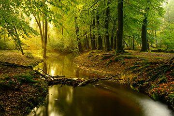Nebenfluss in einem Buchebaumwald während eines frühen Herbstmorgens von Sjoerd van der Wal