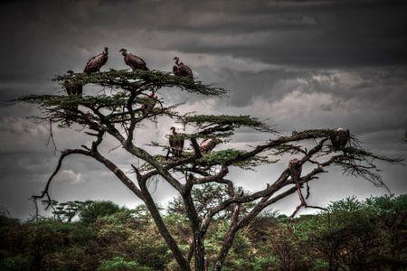 Vulture Tree van BL Photography