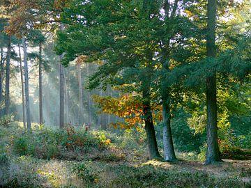Waldkübel aus Kiefernholz von Corinne Welp