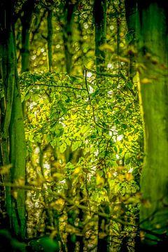 Zonnige doorkijk in het bos