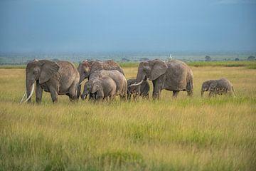Elefantenherde im Ambroselli National Park
