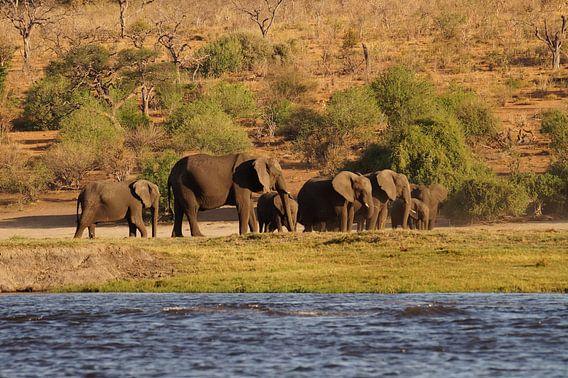 Olifanten bij de rivier