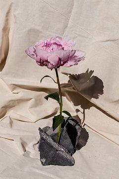 Pfingstrose auf Steinen von Emilia Aivazian Fotografie