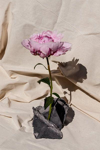 Pioenroos op stenen van Emilia Aivazian Fotografie