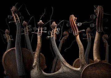 Violina mantodea van Olaf Bruhn
