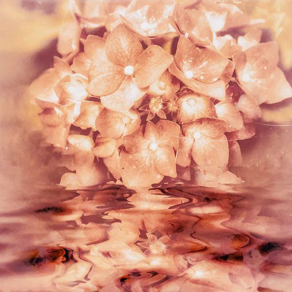 Hortensiawater van Christine Nöhmeier