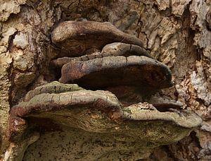 Urbex-elfenbankje in de lente van