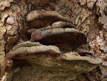 Urbex-elfenbankje in de lente van Eric Oudendijk