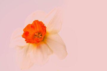 Zwevend in de lente van J..M de Jong-Jansen
