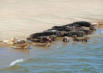 Zeehonden liggend op zandplaat von Rinke Velds