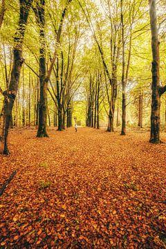 Autumnmood | Hof Espelo (3) van