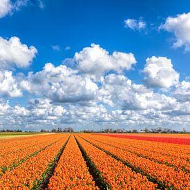 Een lente beeld met bloeiende tulpen van eric van der eijk
