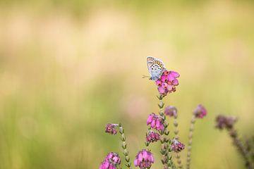 Pretty on pink van Joyce Beukenex