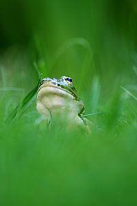 pool frog van